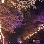 夜桜 「千葉県 香取市 城山公園」