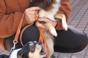 愛犬 ブリーダーさんが訪れる。