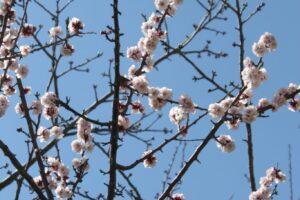 2011.3.11 震災後 千葉県 銚子市 小学校 卒業式