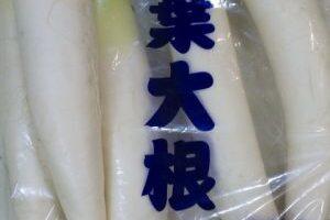 千葉大根 千葉県産 水分が豊富に含まれている気がします。