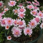 季節の花 5月 気がつくと 色とりどり